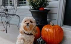Fall in St. Louis: Things to do